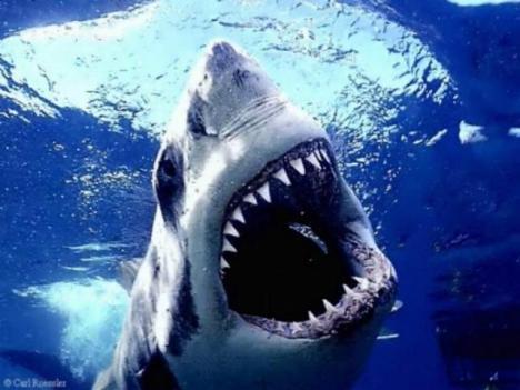 shark-week11