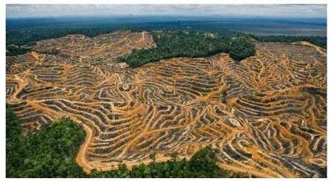 amazonia-desmatamento-destruição